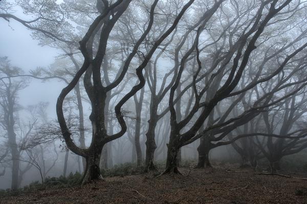 「霧沸き立つ」  青木 照実