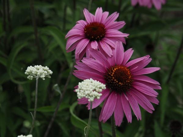 「初夏の花」  横井 守