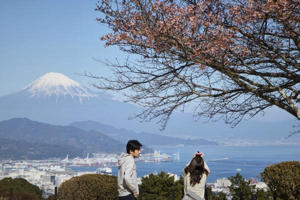 「梅や桜が咲き始めました」  吉川正宏