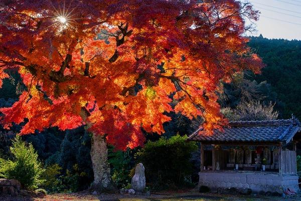 「燃え立つ紅葉」  加藤 洋一
