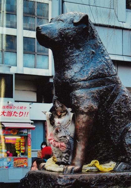 「まねき猫」  吉田 稔