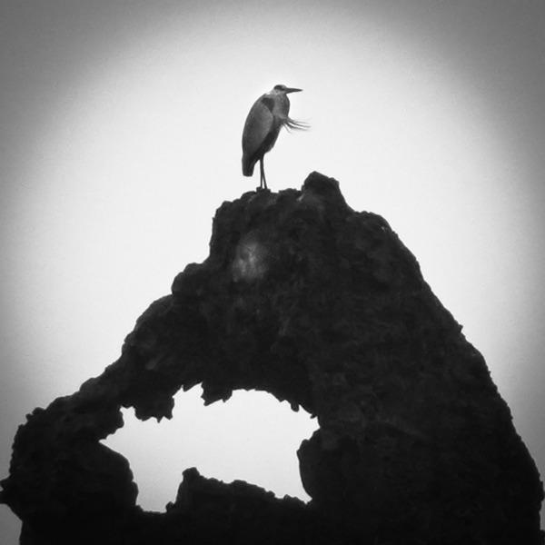 「ゴジラと鷺」  石川 一見