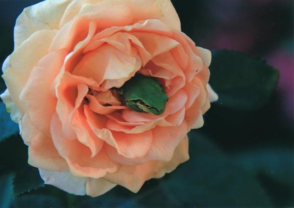 「 花の宿」  児玉 勝年