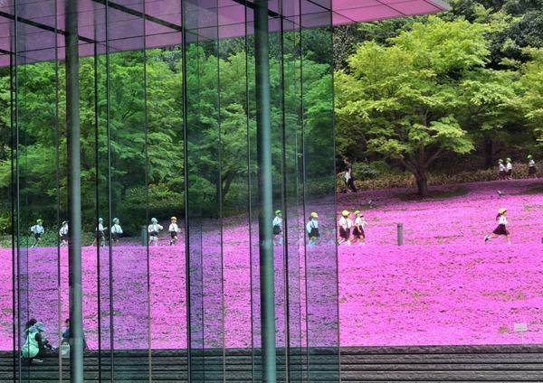 「ビルの芝桜」  竹之内範明