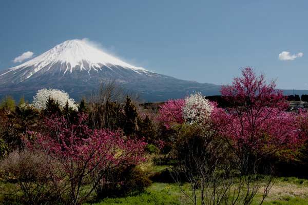 掲載された薩川高宏さんの「芝川柚野の花々」