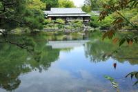 <静岡の今> 「蘇えった小浜池」  高根美奈夫