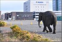 <静岡の今> 「象の散歩」  山田 康