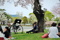 <静岡の今> 「桜の木の下に」  水野隆子