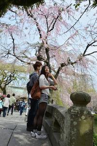 <静岡の今> 「振り向けば春!」  神尾 一