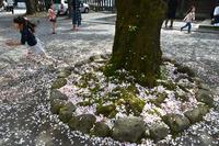 <静岡の今> 「春にダッシュ!」  神尾 一