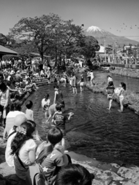 <静岡の今> 「初夏の訪れ」  鳥羽 明