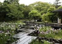 <静岡の今> 「梅雨入り」  吉川正宏