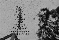 <静岡の今> 「空を埋める鳥」 山田 康