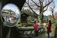 <静岡の今> 「丸子宿場祭り」  中村勝利