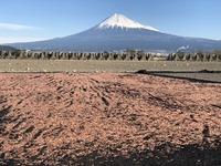 <静岡の今> 「桜エビと富士」 村越敏治