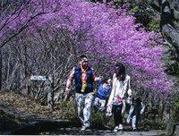 <静岡の今> 「ミツ葉ツツジの咲く道」  鈴木静子