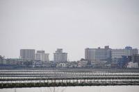 <静岡の今> 「海苔棚の風景」  堀野良一