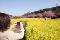 <静岡の今> 「春を保存する」  辻村友博