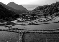 <静岡の今> 「水の見回り」 青木照実