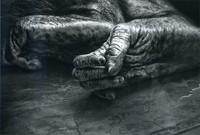 モノクロ写真の部 特選 「手と足と」 大和善信