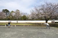 <静岡の今> 「公園独り占めフリスビー」  吉川正宏