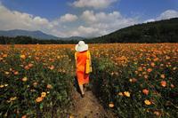 「オレンジの花畑」  鈴木文雄