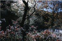 「全日写連風景フォト展2009」山田康さん金賞受賞