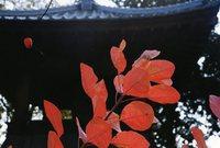 ●組写真の部 ◎特選 「秋日和」 山田康